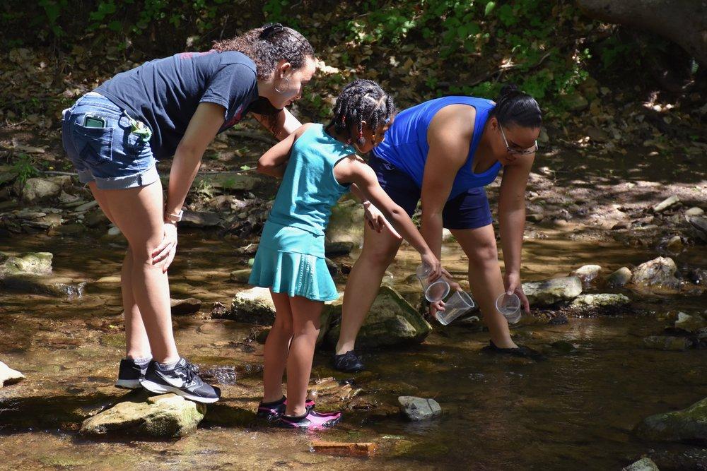 Creek Critters.jpg