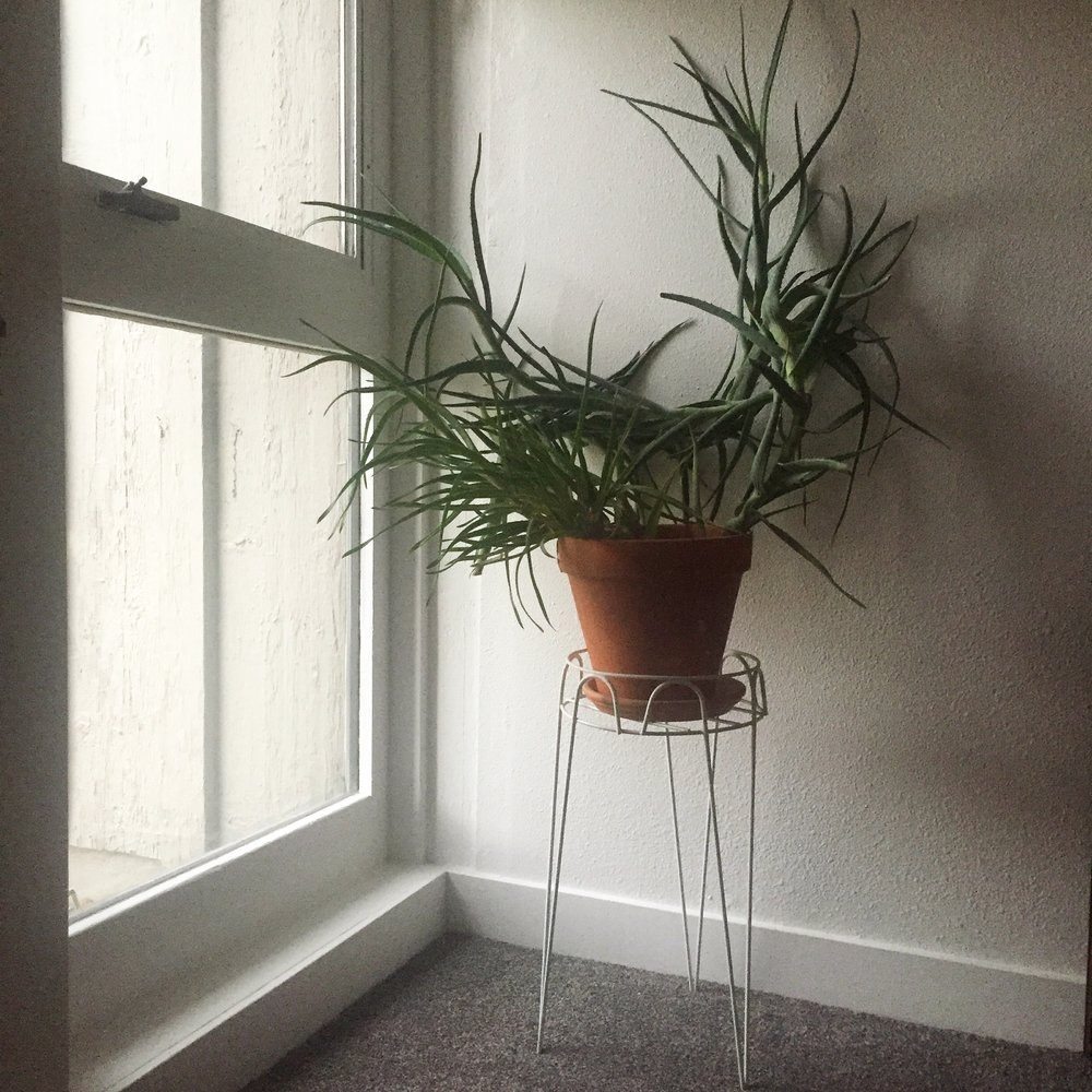 Aloe in Window.jpg