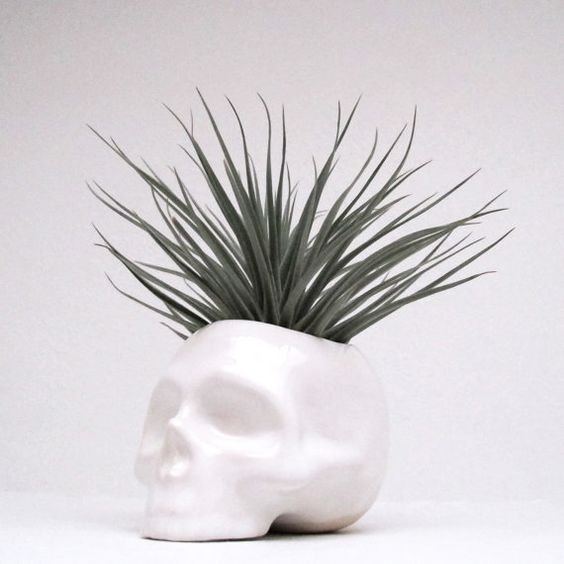 Mudpuppy Ceramics | Skull Planter