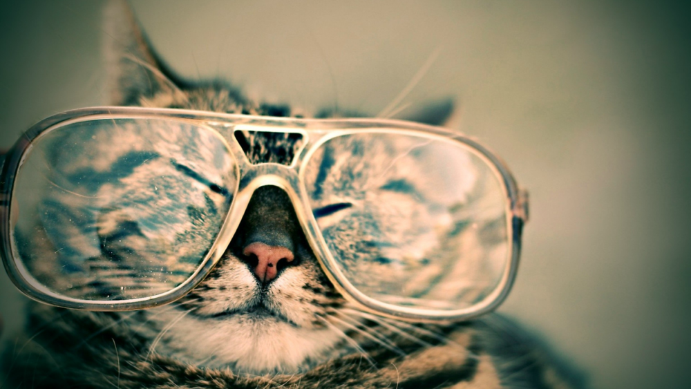 Tabby cat wearing a pair of glasses.