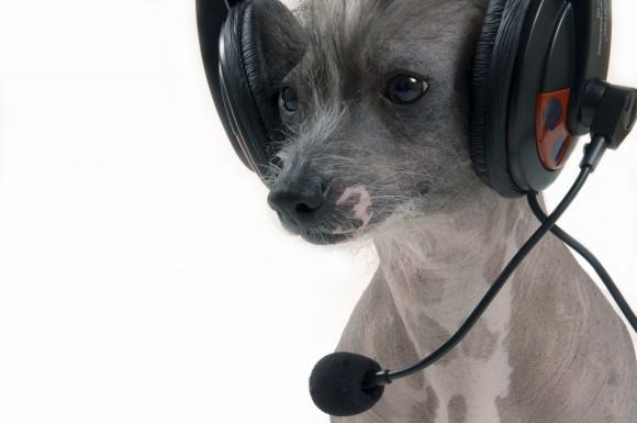skype or phone behaviour consultations