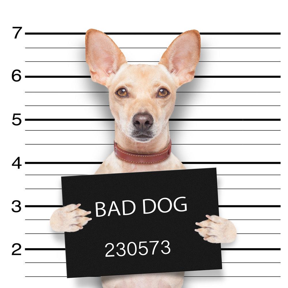 bad dogs training