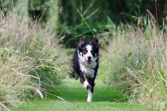 Life skills training for dogs
