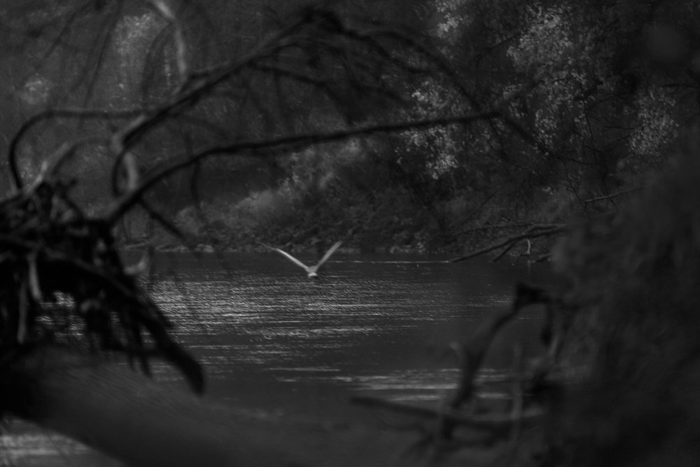 heron-trees-72.jpg
