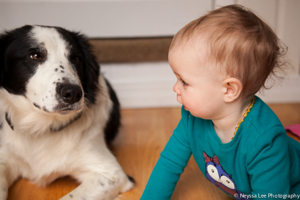 Photo Recipe for Kids with their Dog, Photograph the Every Day, Toddlers and dog, border collie