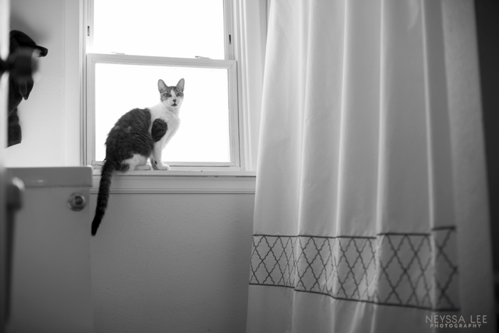 Summer Photo Challenge, Cat in window