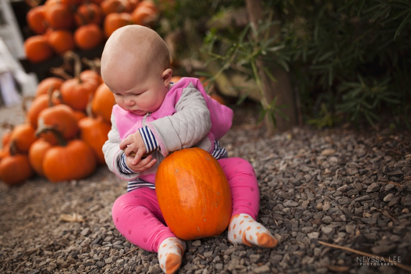 7 Month old baby girl, pumpkin patch, baby and pumpkin