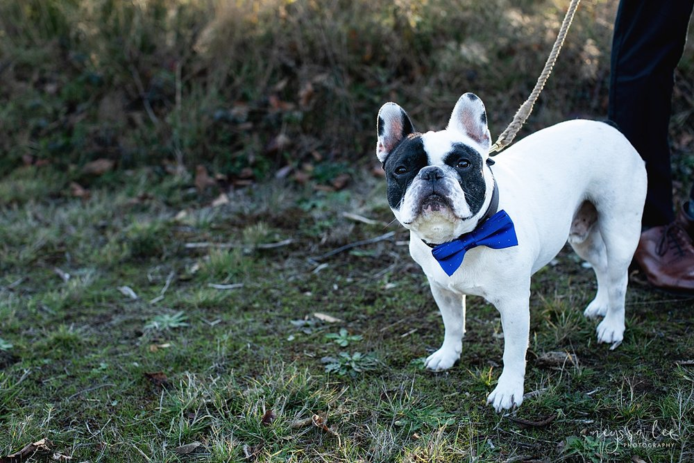 Neyssa Lee Photography, Seattle Lifestyle Family Photographer,  photo of french bulldog