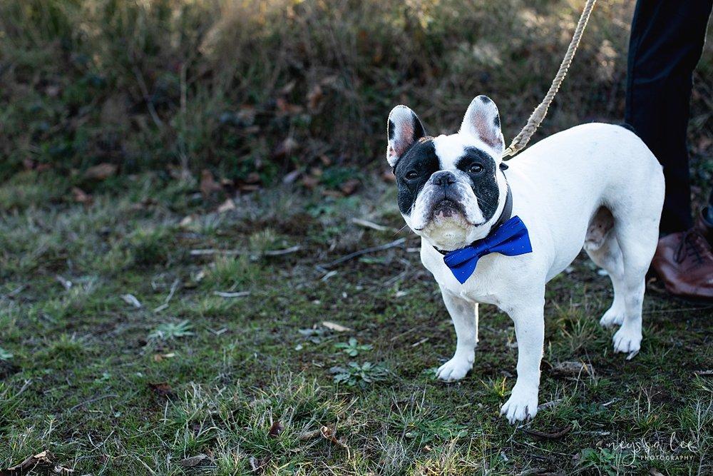 Neyssa Lee Photography, Seattle Lifestyle Family Photographer,  photo of french bulldog