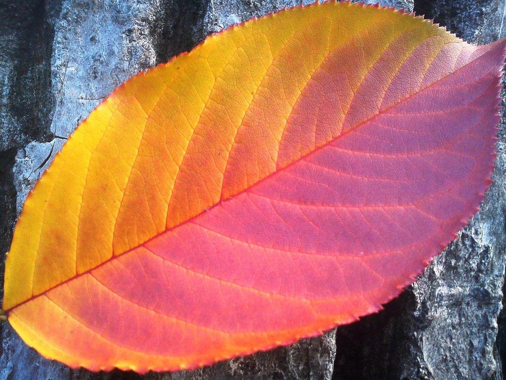 foliage-78767_1280.jpg