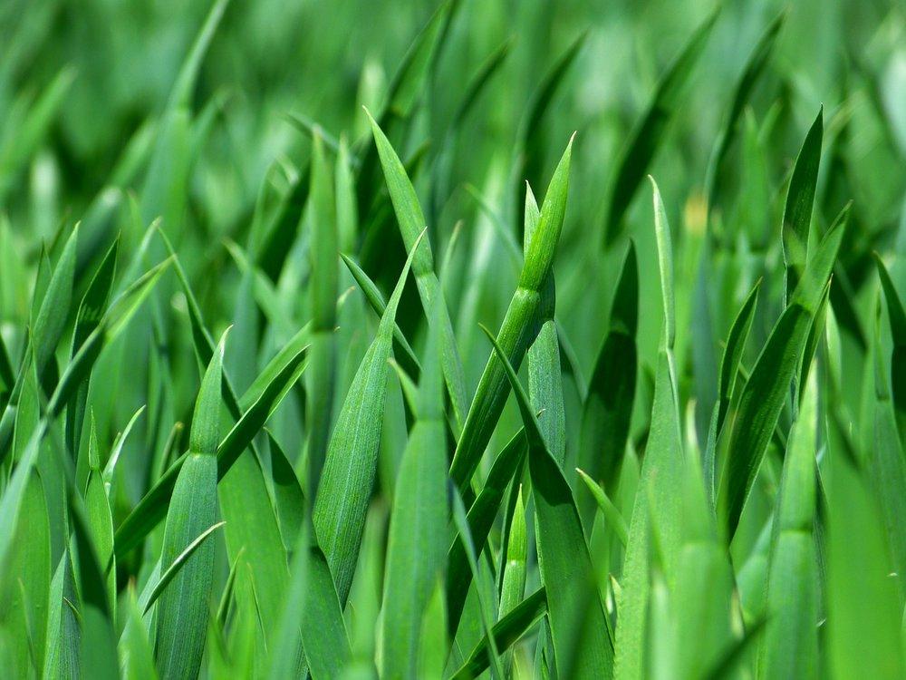 grass-383284_1280.jpg