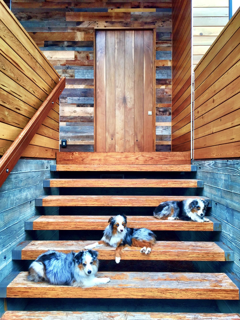 The front entry stairs are made of PSL beams.  Pivoting extra large walnut door and barn wood exterior walls.  And three mini Aussies.