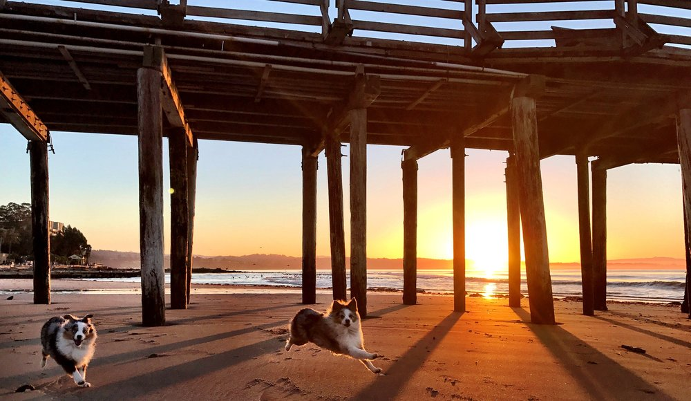Bri's two mini Aussies, Fiji and Kiwi, playing underneath the Capitola Pier at sunrise, Feb 14th 2017.