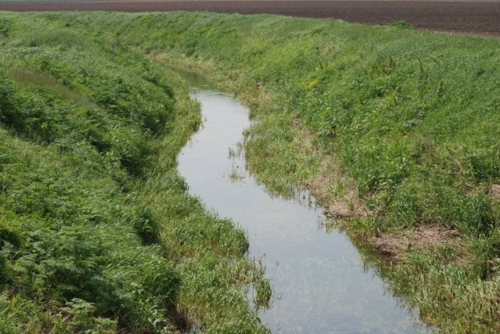 The drainage ditch.