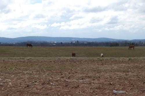 Horses on the horizon