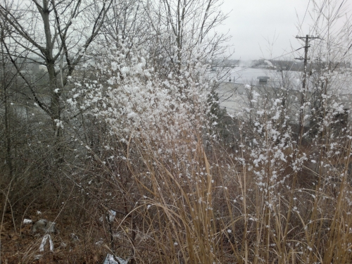 Snow gathering on roadside weeds
