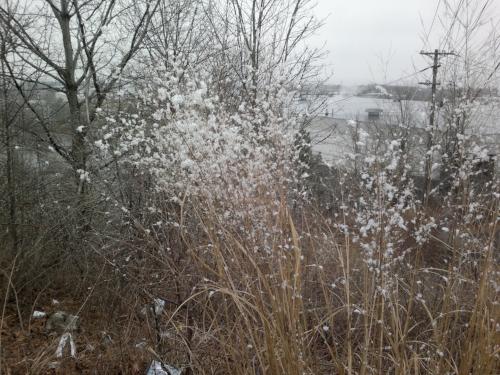 Snow gathering on roadside weeds
