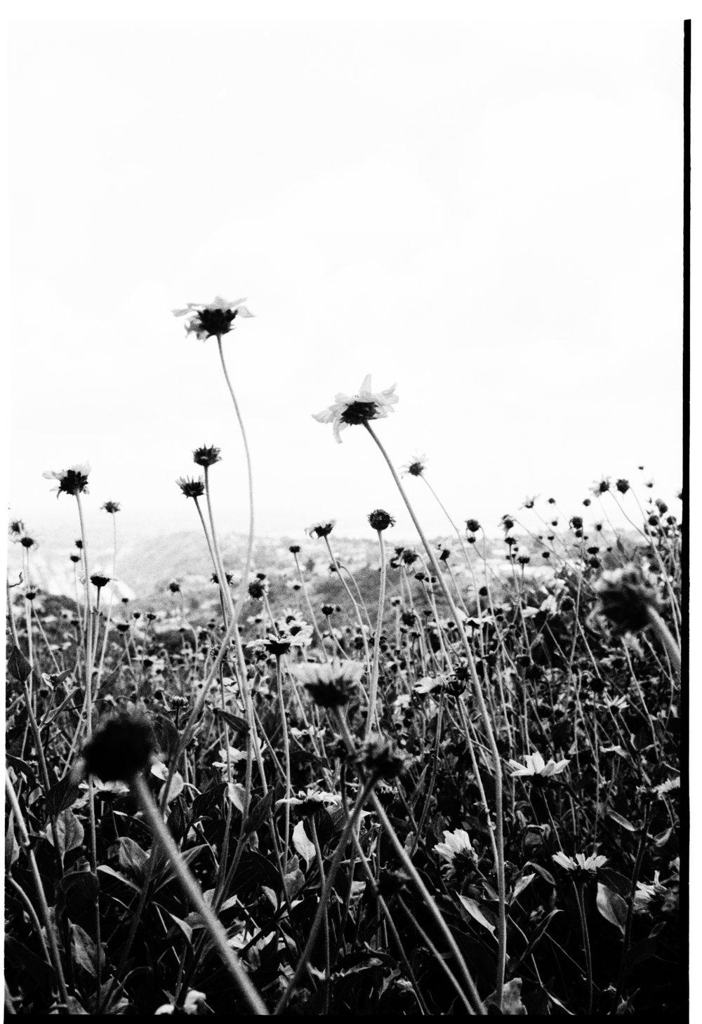 Untitled (2880).jpg