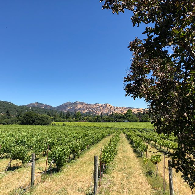 It's Wine Club pick up day! We are releasing our new Tres Vini. Free entry for wine club members. Today from 12-4. $15 for non members. #wine #greenvalley #napa #wineclub #redredwine #winerydogs