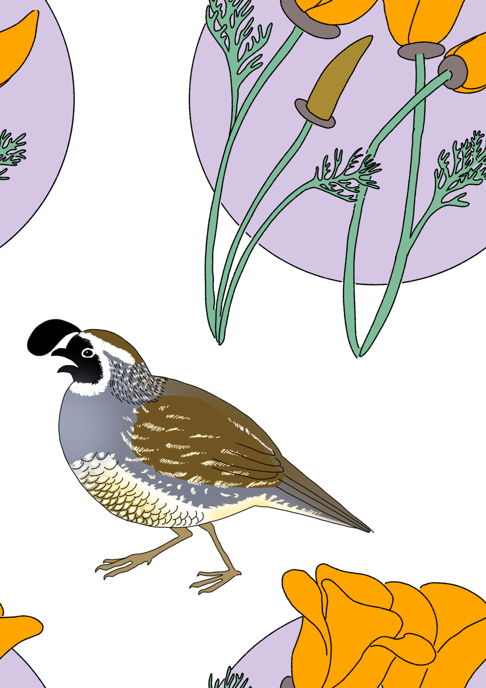 California Quail and California Poppy Pattern