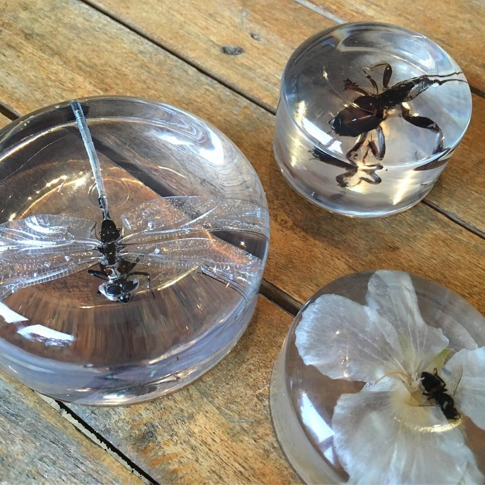 Insects in resin, paperweight