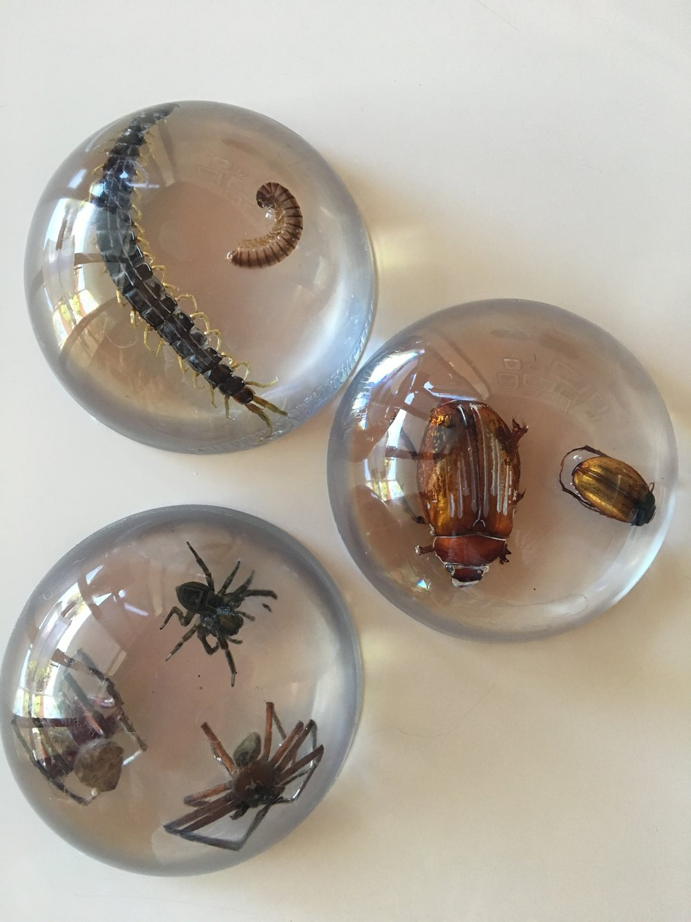 Insects cast in resin - Insect paperweight
