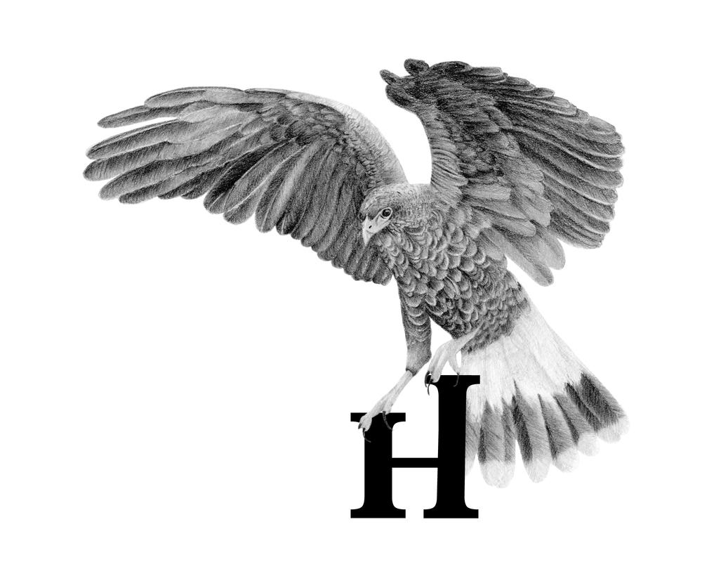 H_Hawk.png