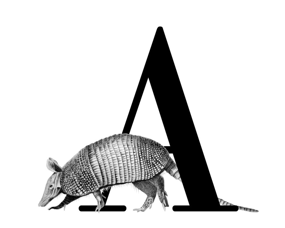Alphabet Animals - I have embarked on a project illustrating all 26 animals, one representing each alphabet.