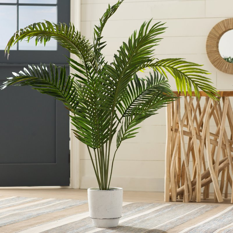 Black Hammock Palm Tree