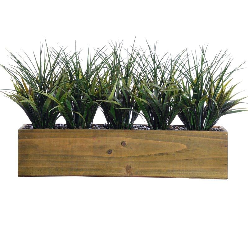 Floor Foliage Grass in Pot