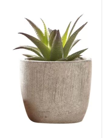 Desktop Succulent Plant in Pot