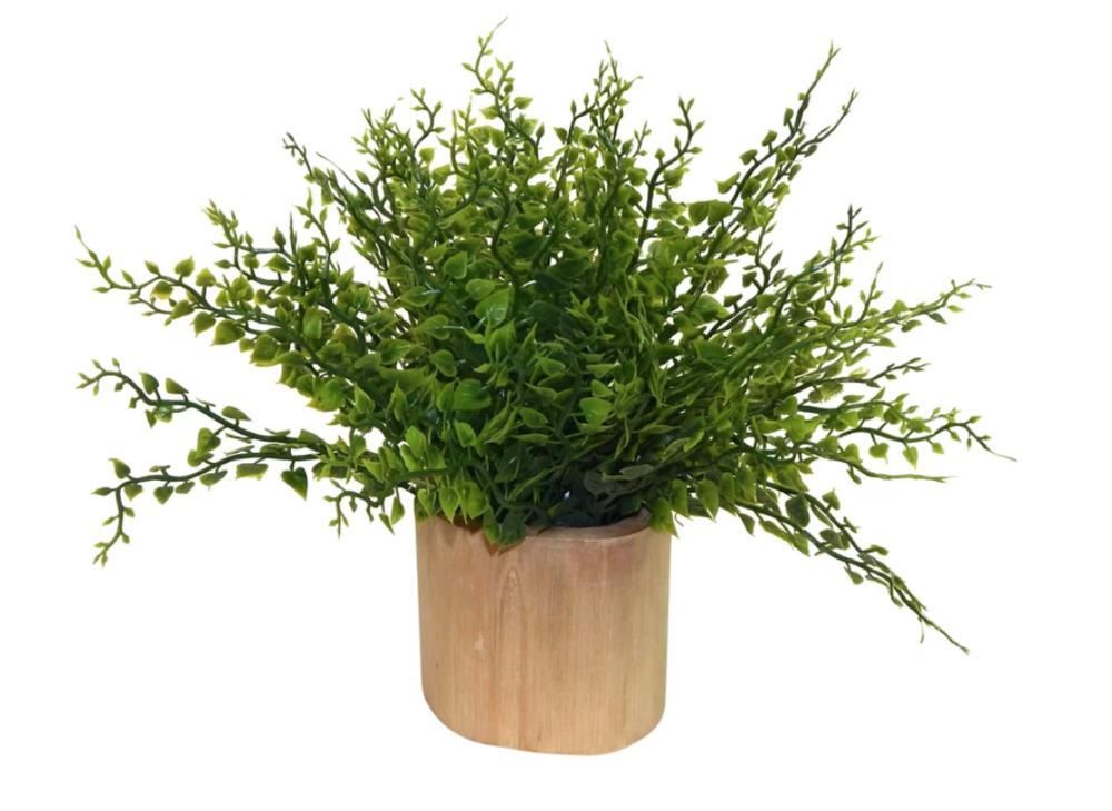 Maiden Fern Plant in Decorative Vase