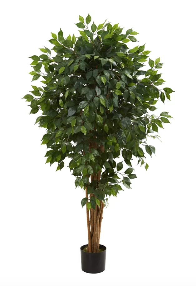 Floor Ficus Tree in Planter