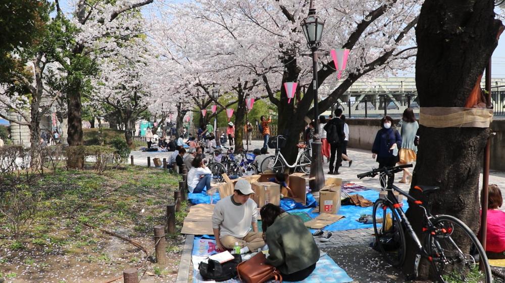 Top 10 Cherry Blossom Tokyo Spots sumida