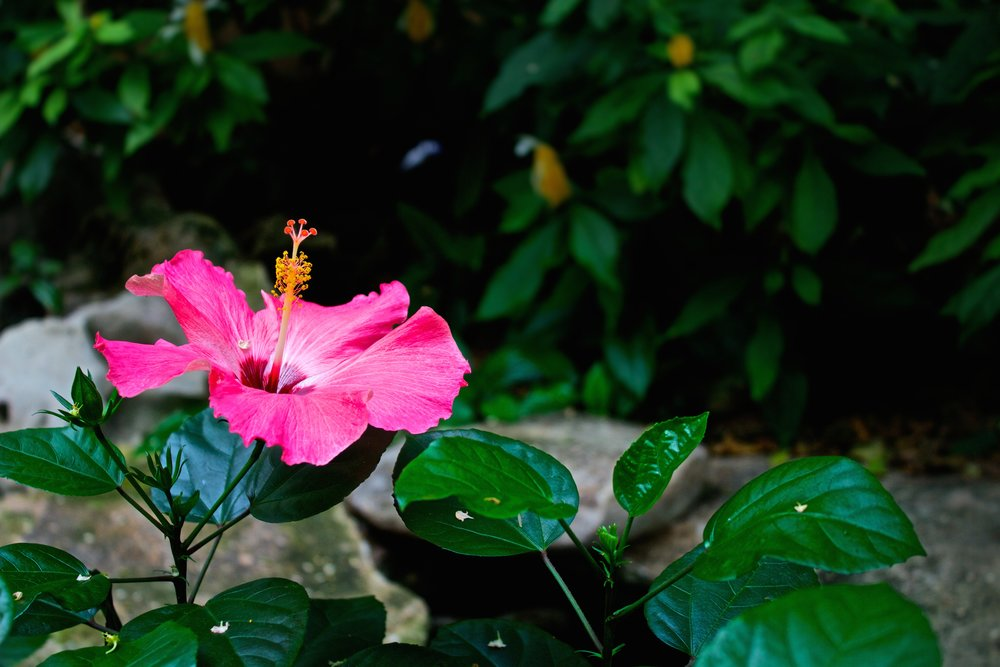 San Antonio Botanical Garden - Phone:210-536-1400Physical Address:555 Funston Place,San Antonio, TX 78209Website