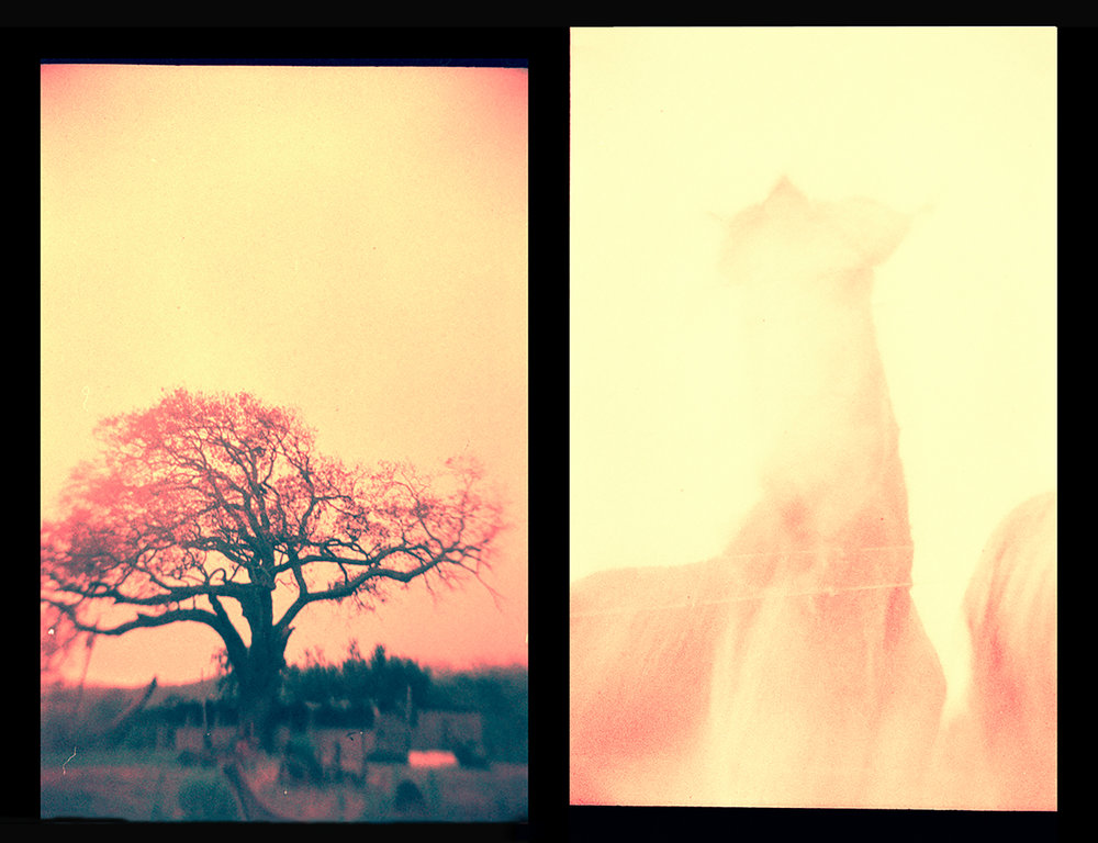 Created using Recessky TLR and expired Fujichrome Provia 100F