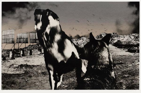 Nadir #15 - Jo Ractliffe, 1987-88