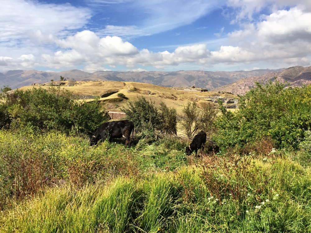 Workout path to Sacsayhuaman