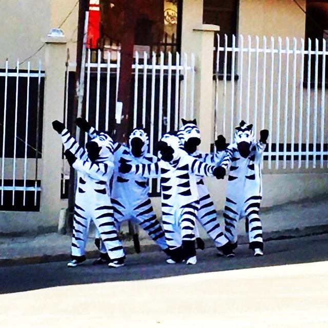 Traffic Zebras