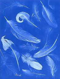 atkins feathers