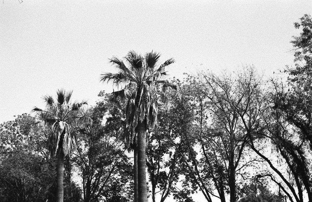 palm-tree-skyline.jpg