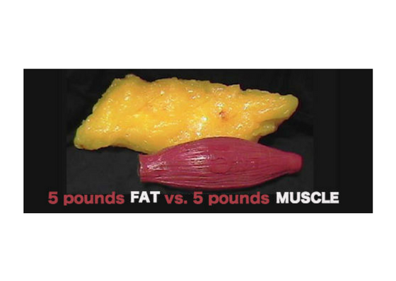 """Fat takes up more space and create a """"lumpy"""" appearance under the skin."""