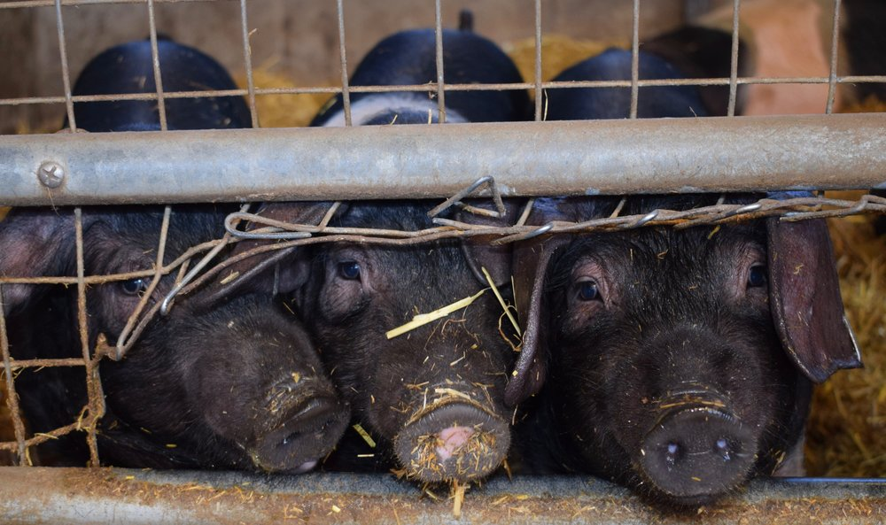 The all-bacon-and-butter-diet will not meet your nutritional needs…and look at these cute little faces! Maybe we should eat LESS bacon.