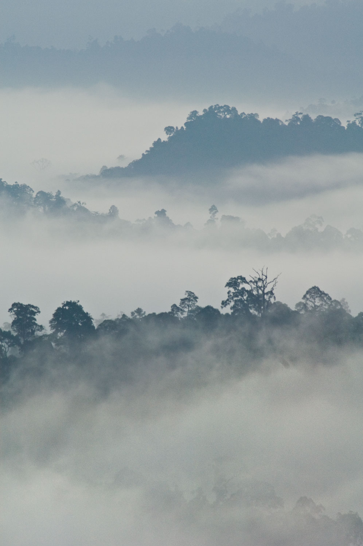 Rainforest-Dawn-01-1500.jpg