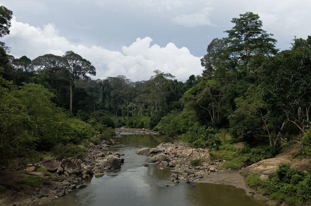 Segama-River-01-1500.jpg