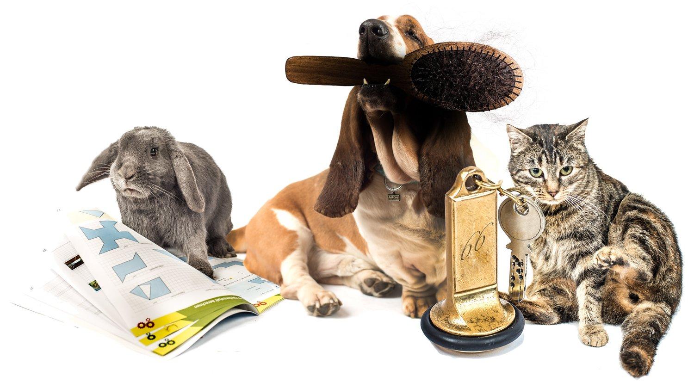 Tierferienheim Höfli und Hundeschule