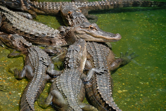 The Everglades National Park is one of the best family vacation spots in Florida