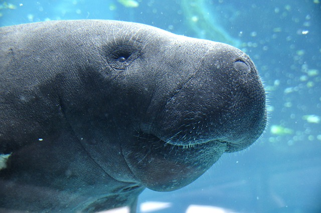 The Florida Aquarium is one of the fun places in Florida to bring kids and families.