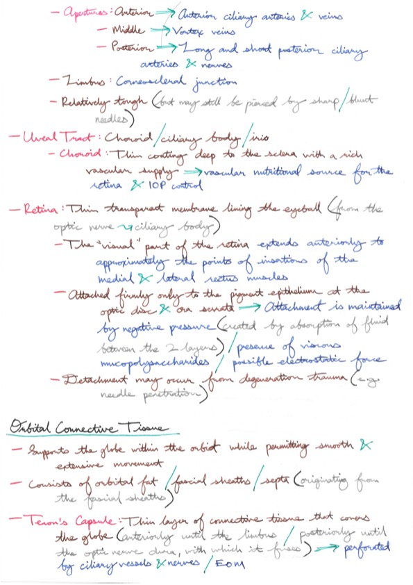 Relevant Anatomy For Ophthalmic Anaesthesia Anakayubs Notes