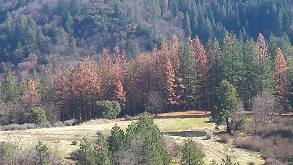 Hospice Trees